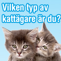 Stora testet för kattägare - Vinn kattmat för ett helt år