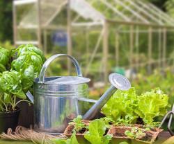 Vinn ett växthus till sommaren